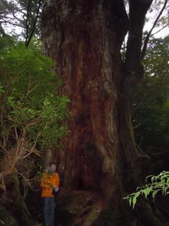 2012年10月、11月 『広島から、鹿児島へ、そして憧れの屋久島宮之浦岳』_c0219616_14534084.jpg