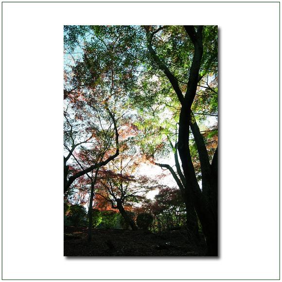 園城寺の秋_e0214724_17123934.jpg