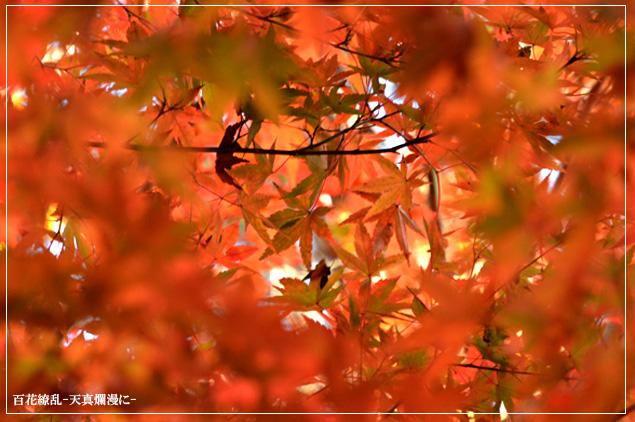 f0235326_20103716.jpg