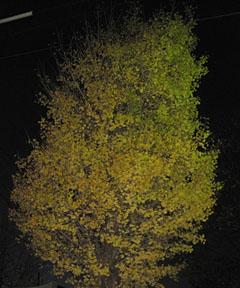 木枯らし1号_a0151444_17271598.jpg