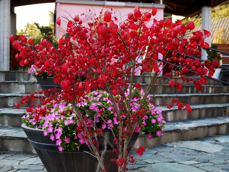 和歌山県植物公園緑花センター _b0093754_21112781.jpg