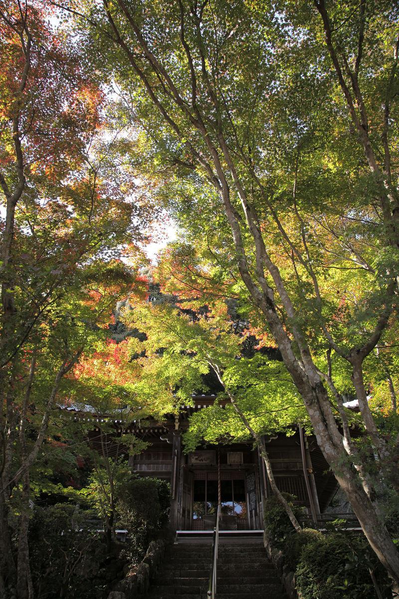 紅葉 2012 西山  勝持寺_f0021869_22362067.jpg