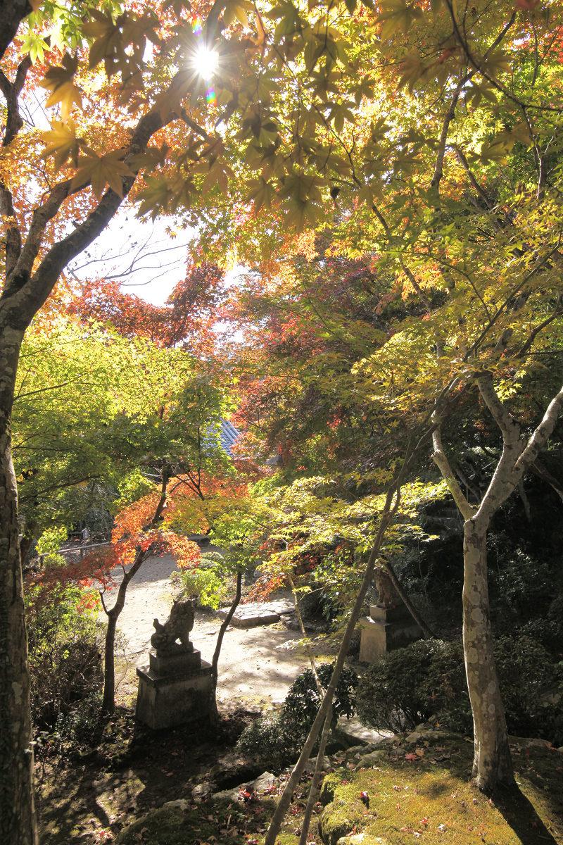 紅葉 2012 西山  勝持寺_f0021869_22491920.jpg