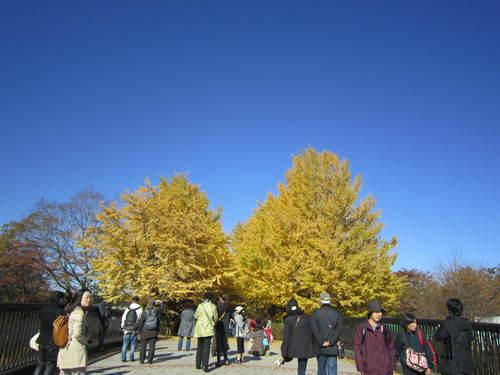 国営昭和記念公園の黄葉&紅葉_a0180279_18245884.jpg