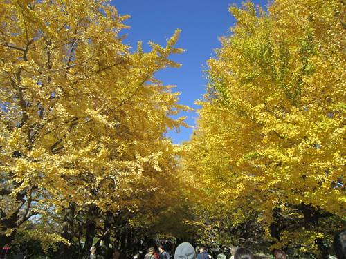 国営昭和記念公園の黄葉&紅葉_a0180279_18285671.jpg