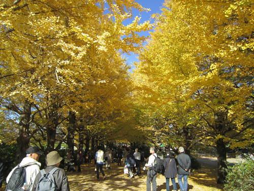 国営昭和記念公園の黄葉&紅葉_a0180279_18313836.jpg