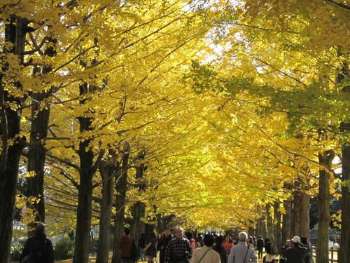 国営昭和記念公園の黄葉&紅葉_a0180279_18431848.jpg