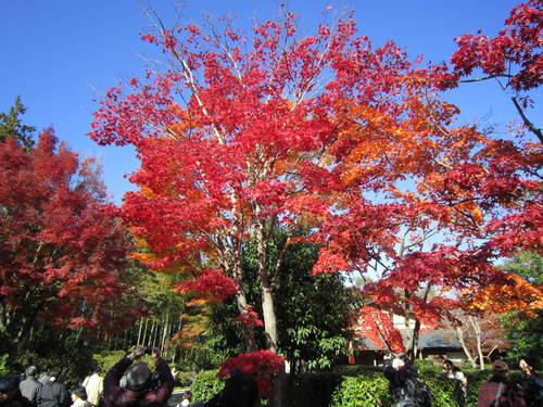 国営昭和記念公園の黄葉&紅葉_a0180279_18461396.jpg