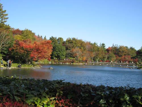 国営昭和記念公園の黄葉&紅葉_a0180279_18543255.jpg