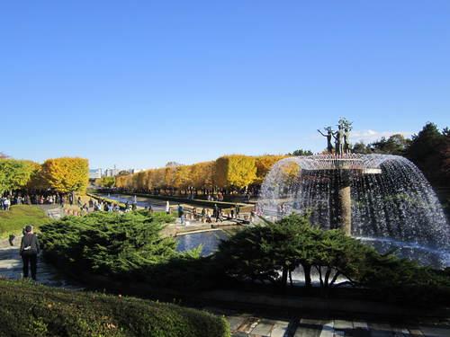 国営昭和記念公園の黄葉&紅葉_a0180279_19194661.jpg