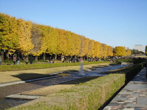 国営昭和記念公園の黄葉&紅葉_a0180279_1922734.jpg