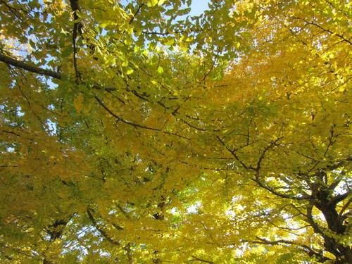 国営昭和記念公園の黄葉&紅葉_a0180279_19233313.jpg