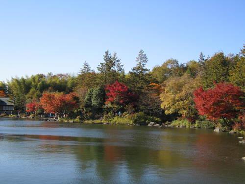 国営昭和記念公園の黄葉&紅葉_a0180279_1981217.jpg