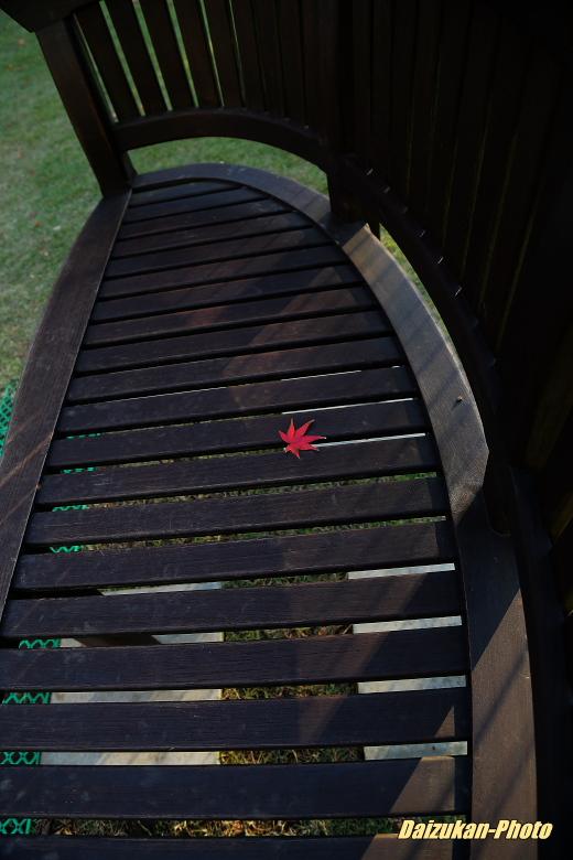 紅葉とドッグラン_d0167382_23253811.jpg