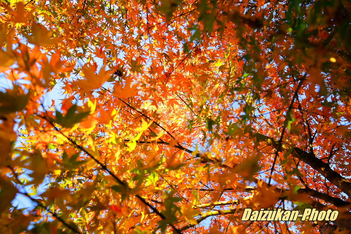紅葉とドッグラン_d0167382_2329418.jpg