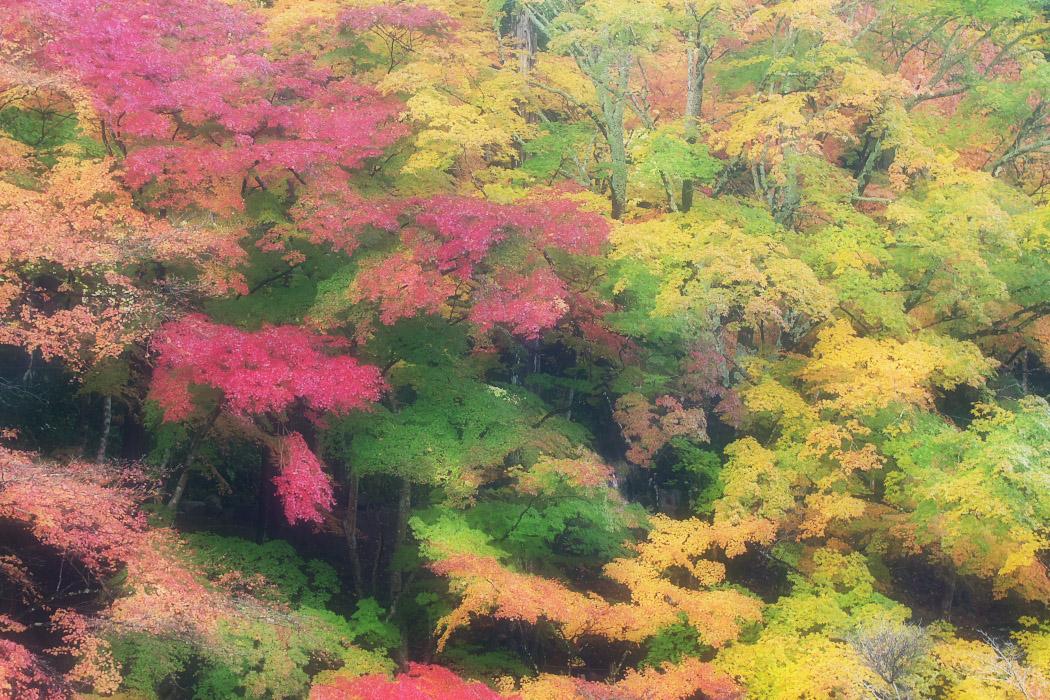紅葉2012@香嵐渓_c0187584_18544029.jpg