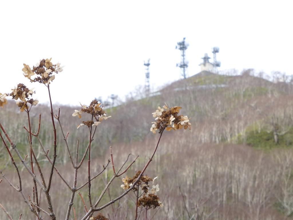 11月16日、恵庭岳、イチャンコッペ山、紋別岳-紋別岳編-_f0138096_13254468.jpg