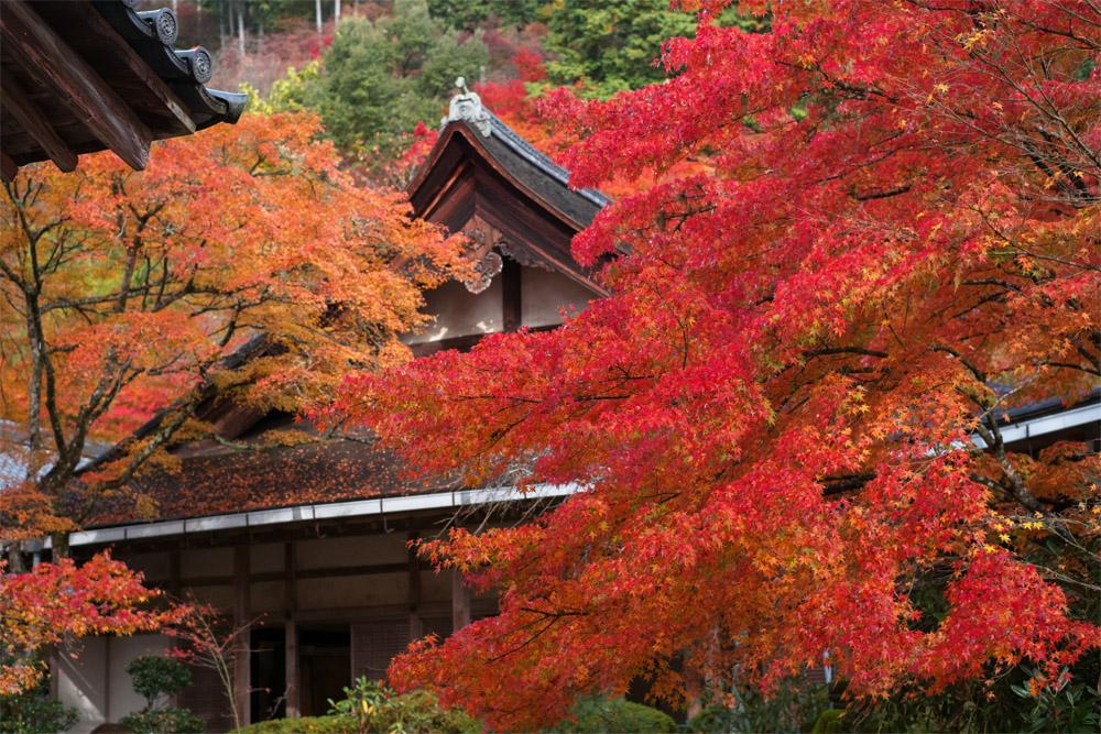 西明寺(滋賀)
