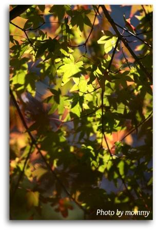 移りゆく季節・・・_a0169912_20533110.jpg