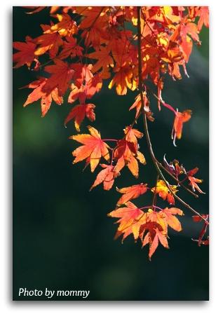 移りゆく季節・・・_a0169912_20563944.jpg