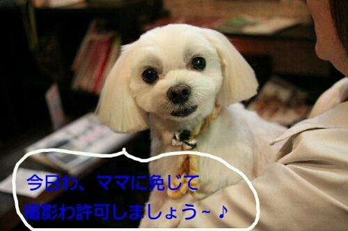 b0130018_20574370.jpg
