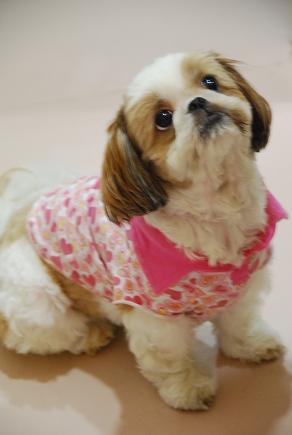 犬の勉強会 「Cafe glance」 カフェ グランス_c0099133_10264138.jpg