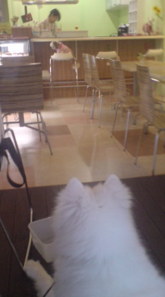 犬の勉強会 「Cafe glance」 カフェ グランス_c0099133_1026424.jpg