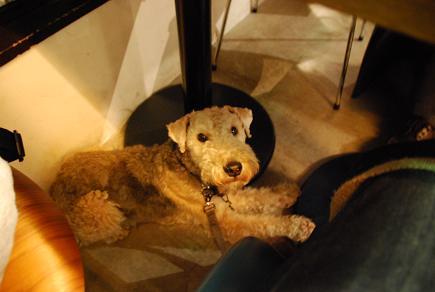 店内犬OKのカフェ 用賀倶楽部_c0099133_10272267.jpg