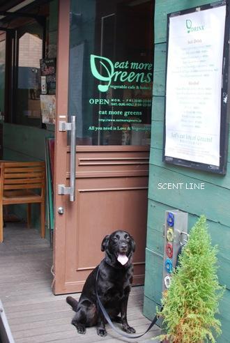 テラスのみ犬OK 「eat more greens」(イートモアグリーンズ)_c0099133_10274768.jpg