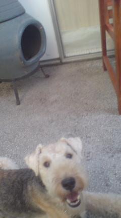 犬と行けるカフェ SECOND HOUSE_c0099133_1027861.jpg