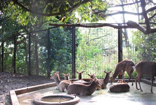 夢見ヶ崎動物公園_c0099133_10281127.jpg