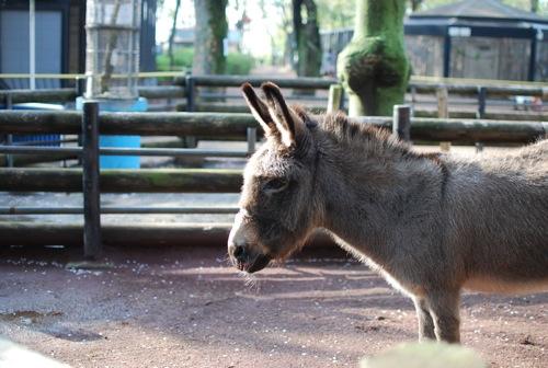 夢見ヶ崎動物公園_c0099133_10281218.jpg