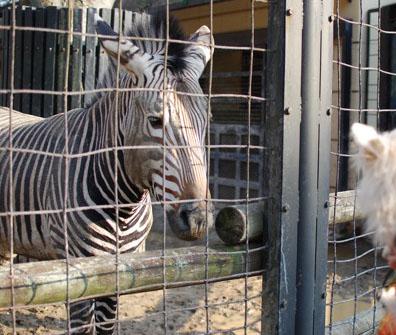 夢見ヶ崎動物公園_c0099133_10281353.jpg