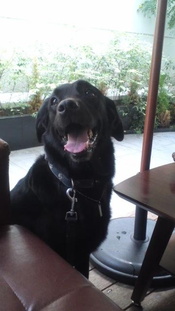 店内もテラスも犬OK「BONDI CAFE」_c0099133_1028187.jpg