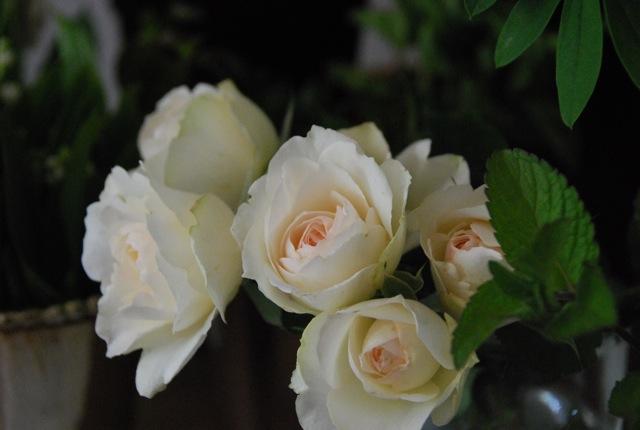 祖母への誕生日プレゼント_c0099133_10282595.jpg