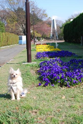 夢見ヶ崎動物公園_c0099133_1028858.jpg