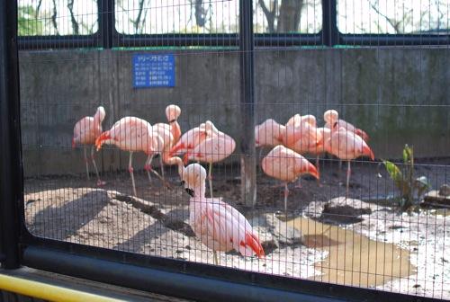 夢見ヶ崎動物公園_c0099133_1028917.jpg