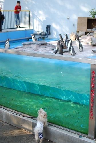夢見ヶ崎動物公園_c0099133_1028955.jpg