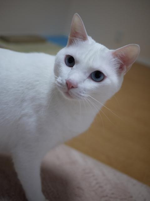 猫のお友だち vieくん編。_a0143140_21162754.jpg