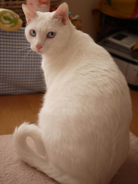 猫のお友だち vieくん編。_a0143140_21342861.jpg
