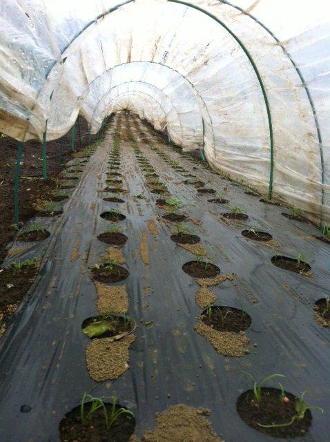 今日は、畑到着直前に大雨でした_c0222448_13354179.jpg