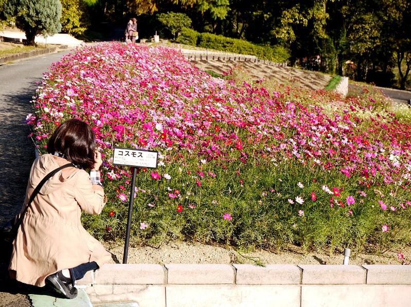 和歌山県植物公園緑花センター _b0093754_20451467.jpg