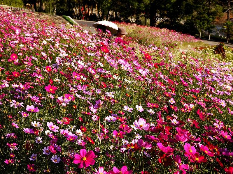 和歌山県植物公園緑花センター _b0093754_20454943.jpg