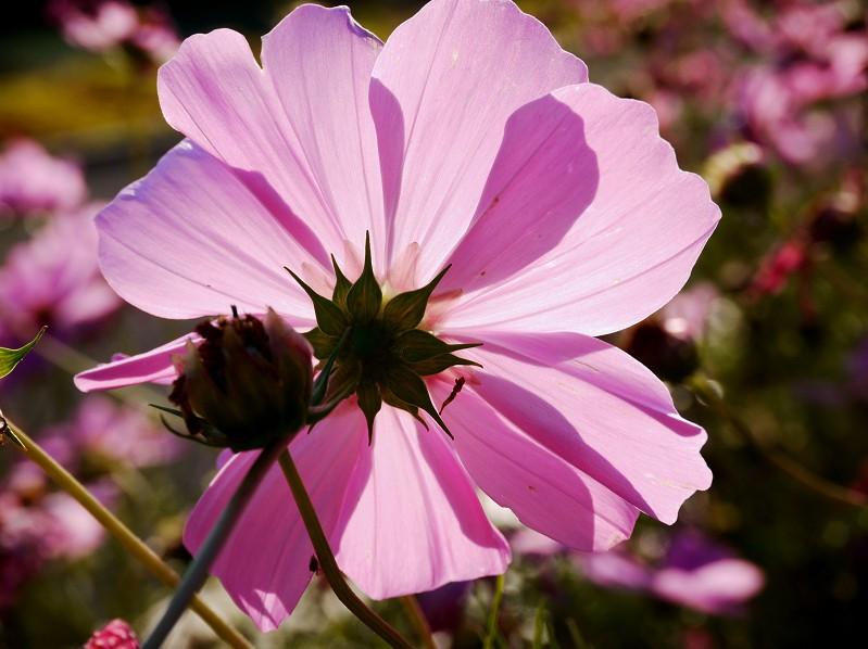 和歌山県植物公園緑花センター _b0093754_20462337.jpg