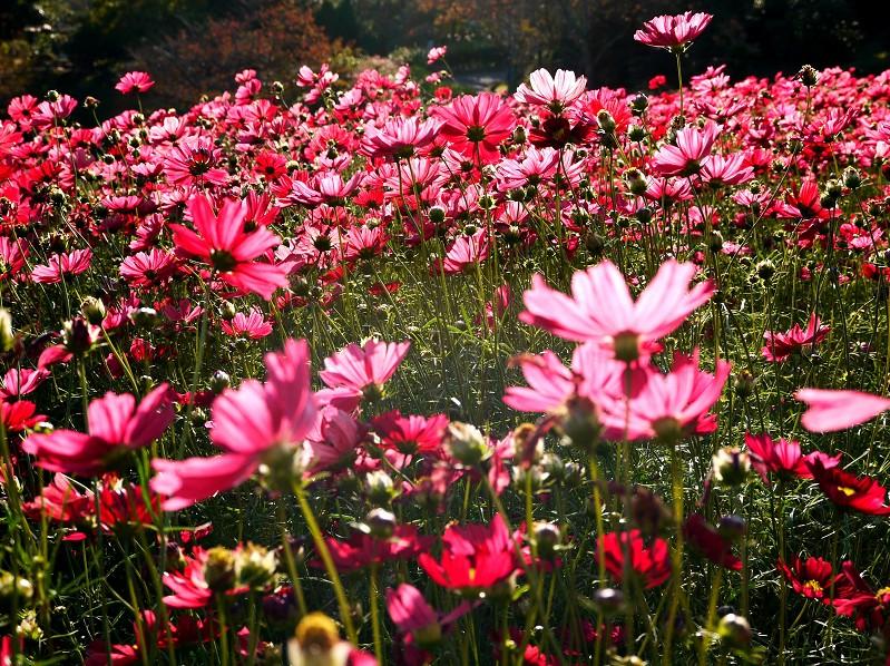 和歌山県植物公園緑花センター _b0093754_20464472.jpg