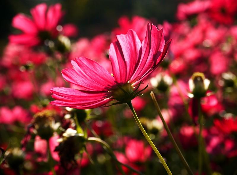 和歌山県植物公園緑花センター _b0093754_20465719.jpg