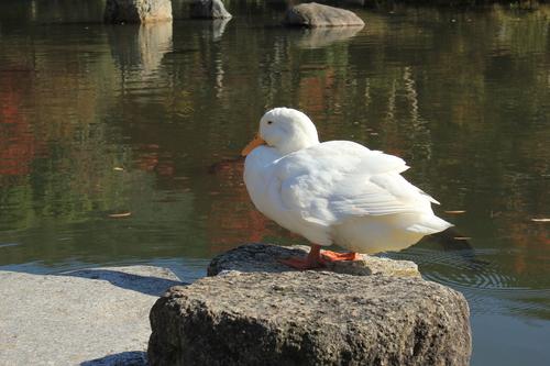 円山公園 紅葉_d0202264_19273451.jpg