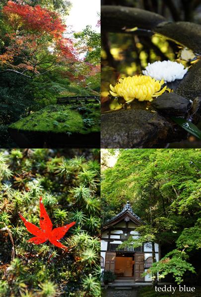 fall walking in Kyoto 2012  秋の京都 紅葉散策_e0253364_22143562.jpg