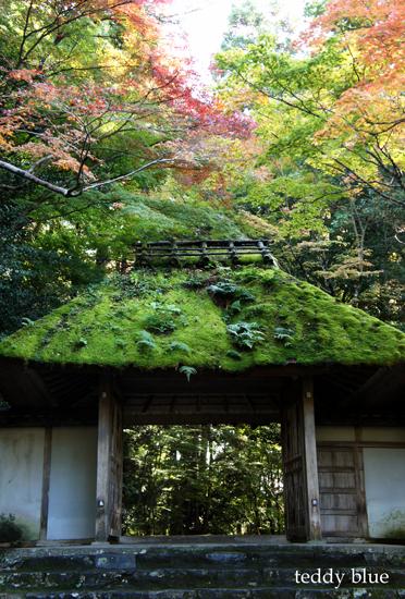 fall walking in Kyoto 2012  秋の京都 紅葉散策_e0253364_2214781.jpg