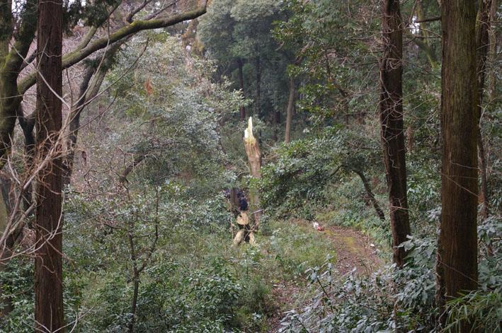 雨中、3人で決行!:11月六国見山森林公園の定例手入れ_c0014967_14552790.jpg
